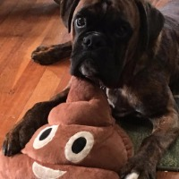 Dozer the Herring Sanitation Mascot - Boxer
